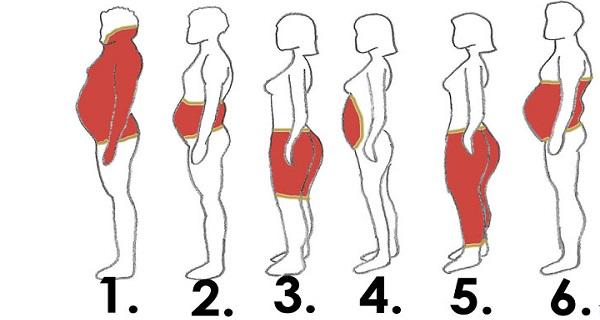 6-tipos-de-gordura-corporal